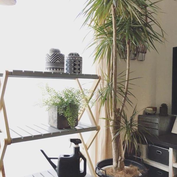 お部屋にシンボルツリーを♪4