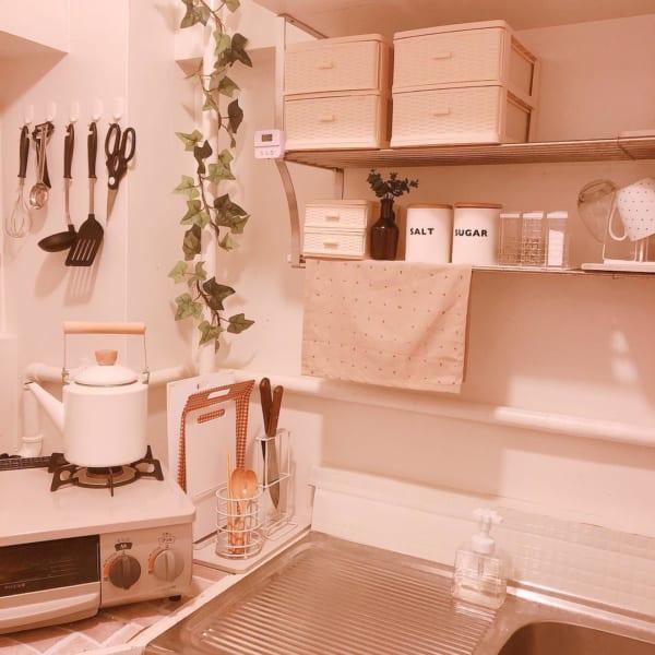 植物特有の持ち味と癒し効果をお部屋にプラス4