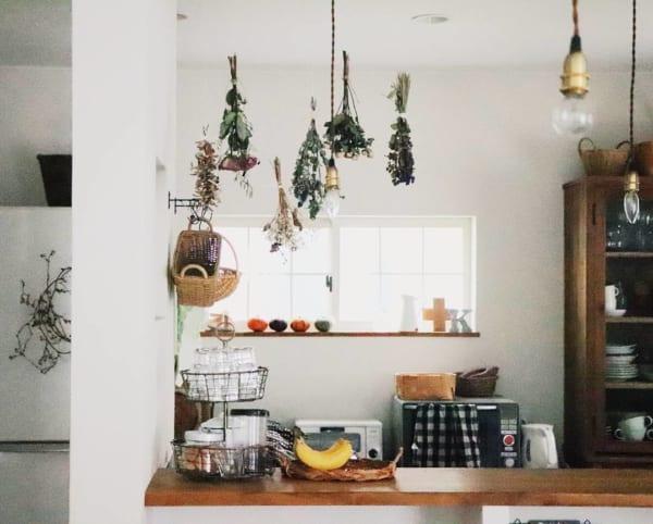 植物特有の持ち味と癒し効果をお部屋にプラス5