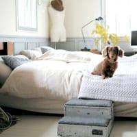 DIYや愛用アイテムをご紹介!ペットと一緒のおしゃれな暮らし