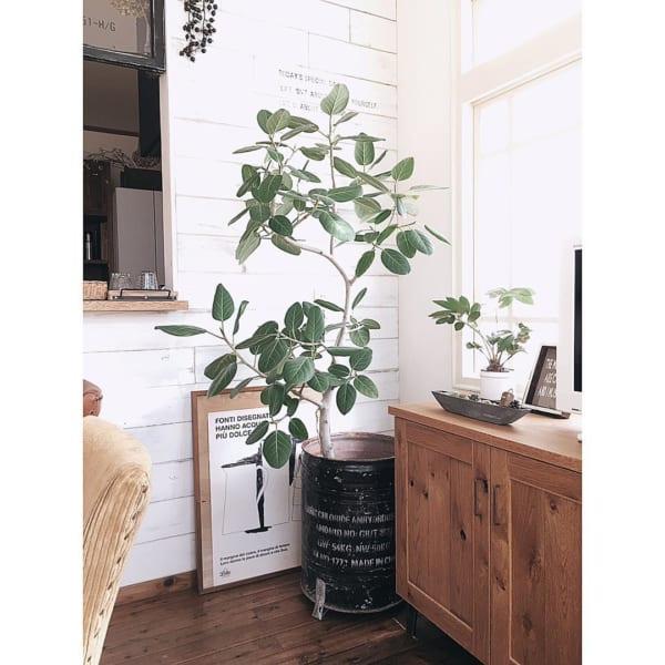 お部屋にシンボルツリーを♪10