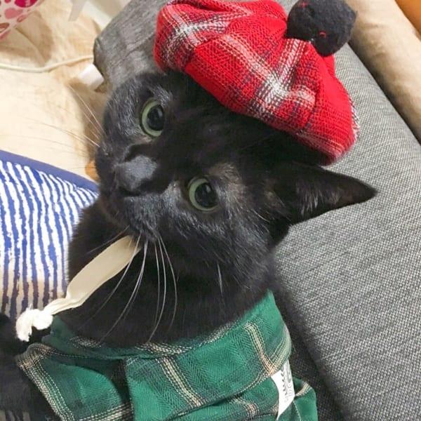 【3COINS】ペット用ポンポン付きベレー帽