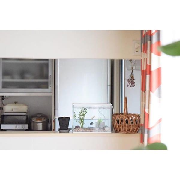 室内装飾にもなるおすすめ加湿グッズの水槽