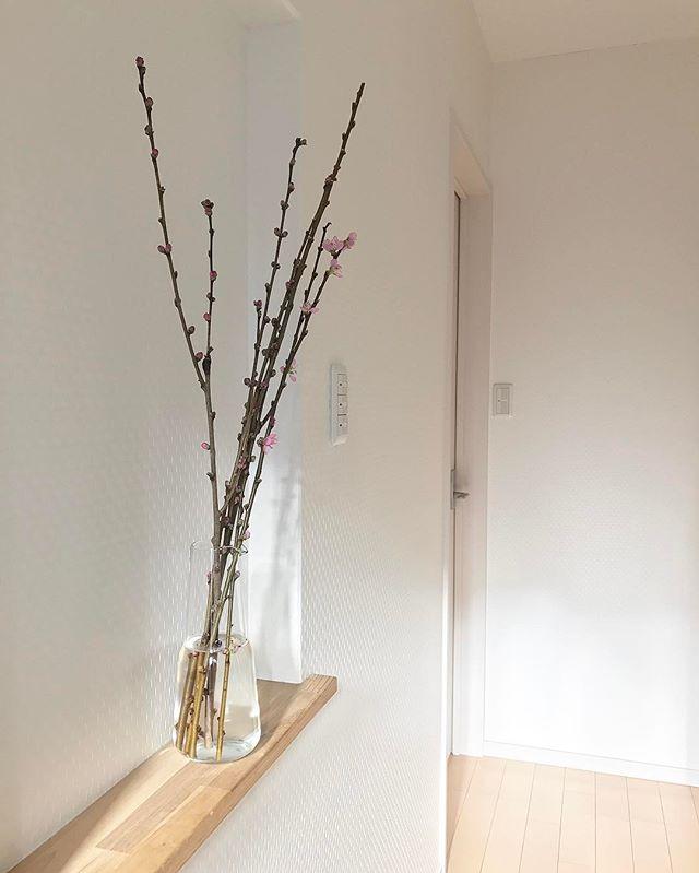 幅が狭い棚を取り付けて季節の花を飾ってみる
