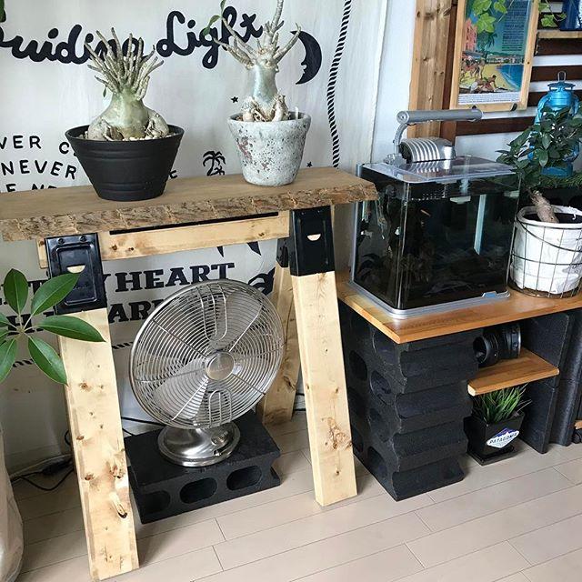簡単に手作りできる簡易棚に植物をON