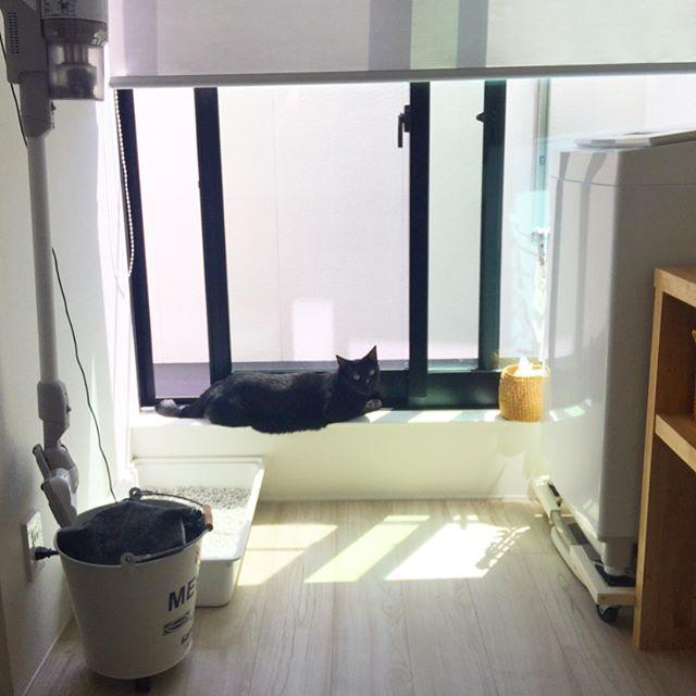 人気のIKEAアイテムを使った猫用トイレ