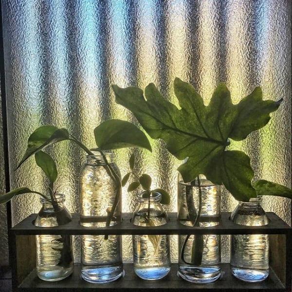 加湿グッズになる可愛い水耕栽培の植物