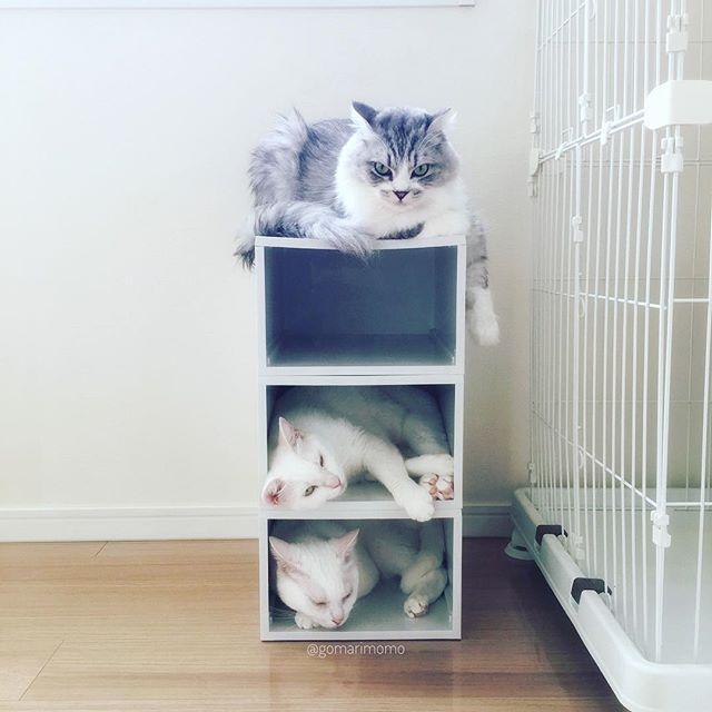 収納ケースを利用した猫マンション