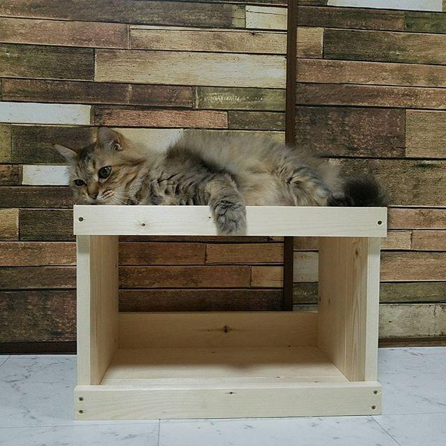 人気のDIYで猫ベッドを作ろう