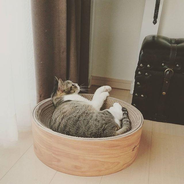定番の爪とぎ付き猫用ベッド