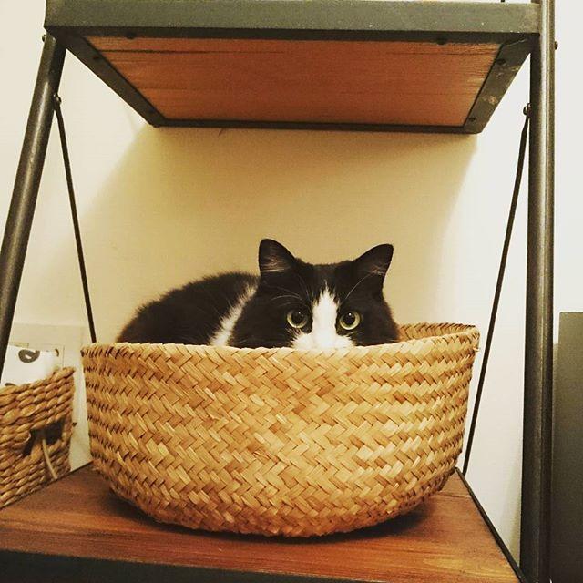 猫に人気の定番雑貨『かご』