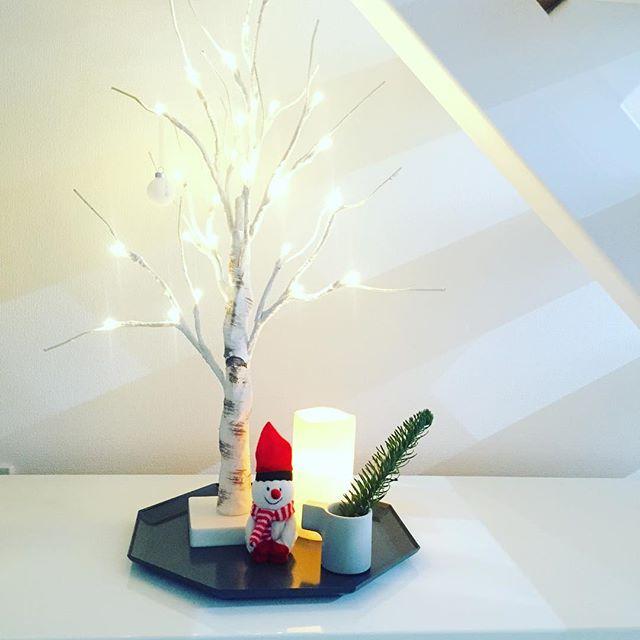 雪国にいるような気分になれる白樺の木