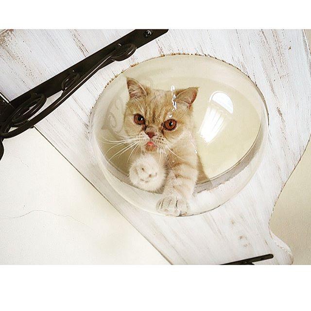 愛猫が丸見え!ボウルカウンター