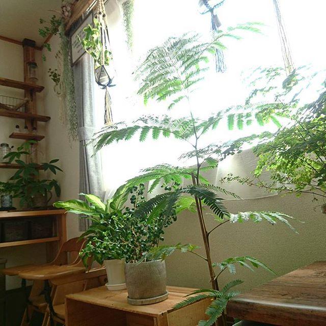 観葉植物 飾り方6