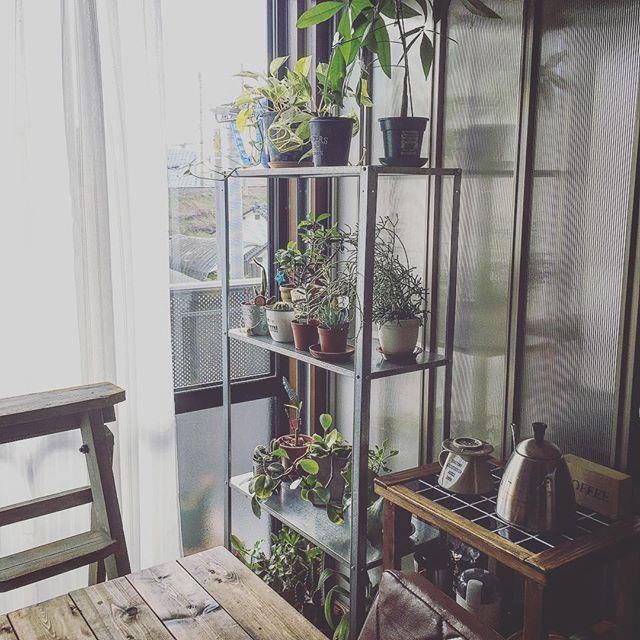 観葉植物 飾り方10