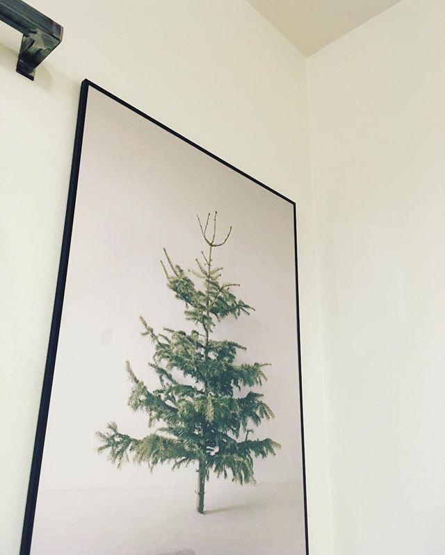 クリスマスにも!もみの木のポスター