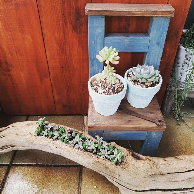 多肉植物を木製椅子に並べたインテリア