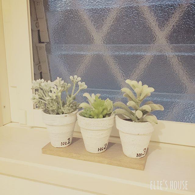 多肉植物を窓枠に置いたインテリア