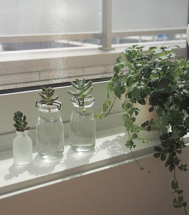 多肉植物を窓辺に置いたインテリア