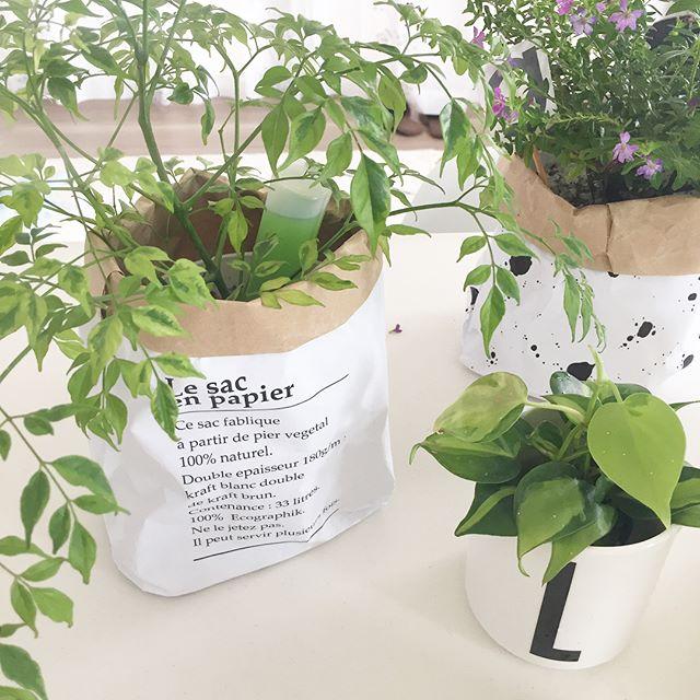 観葉植物 飾り方3