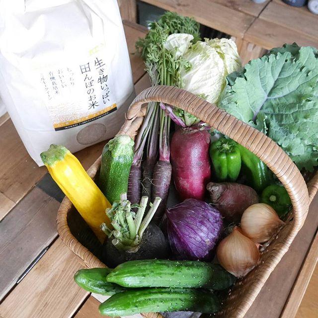 大量野菜にも対応できるおすすめ収納術