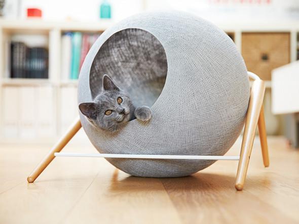 ネコとの暮らし7