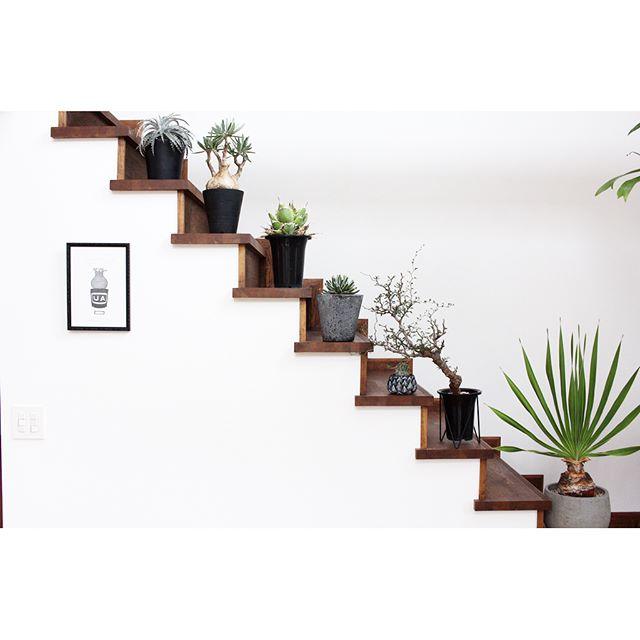 多肉植物を階段に並べたインテリア