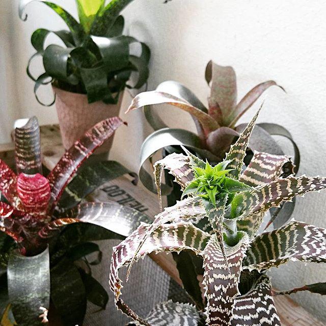 観葉植物 飾り方4