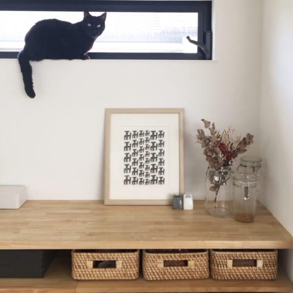 ネコとの暮らし2