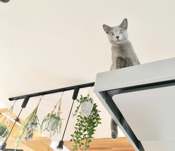 ネコとの暮らし3