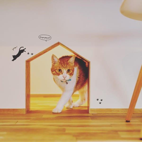 ネコとの暮らし6