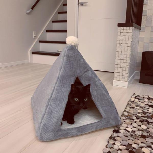 ネコとの暮らし8