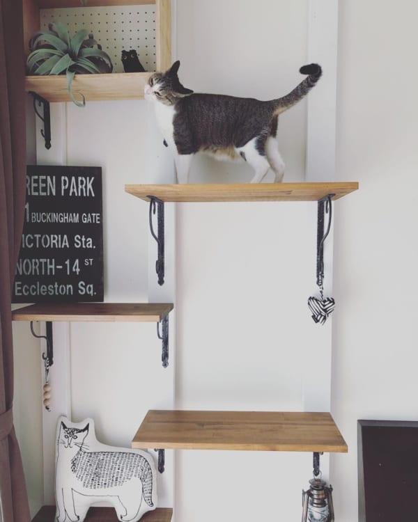 ネコとの暮らし11