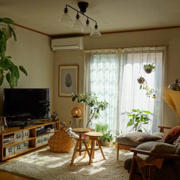 ナチュラルインテリア 観葉植物3