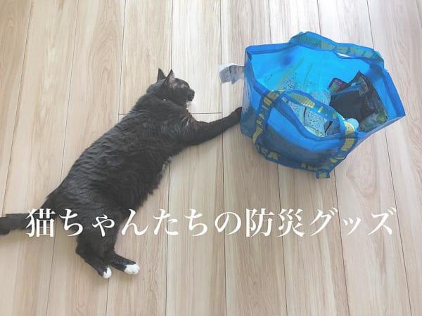 ネコとの暮らし15