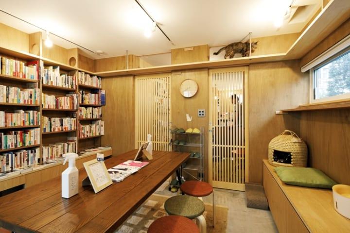本棚の一番上はキャットウォーク。猫が自然に本棚を通り抜ける動線