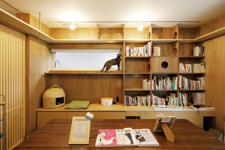 本棚の一番上はキャットウォーク。猫が自然に本棚を通り抜ける動線2
