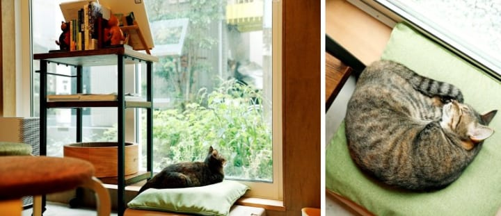 本棚の一番上はキャットウォーク。猫が自然に本棚を通り抜ける動線3