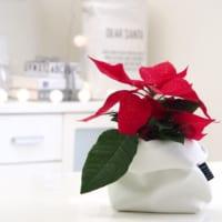 植物で楽しむ冬のインテリア特集♪季節感のあるお部屋は植物で決まります!
