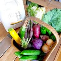 野菜をおしゃれに収納したい♪みんなが実践している保存方法を一挙大公開☆