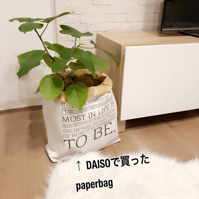 部屋の装飾になる植物を入れる使い方