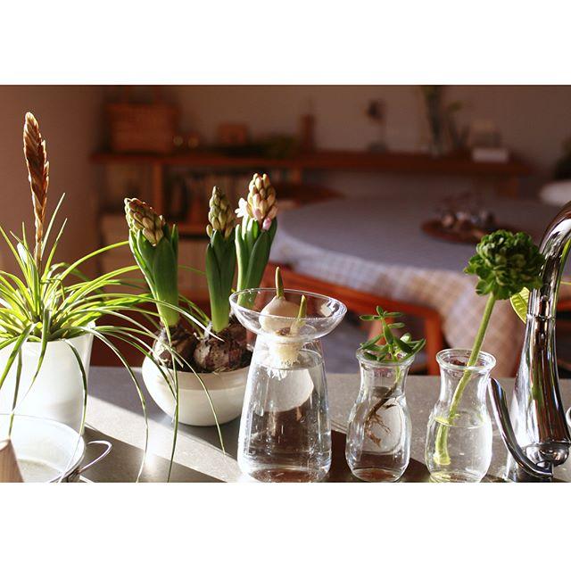 季節の植物と一緒にコーナーをつくる