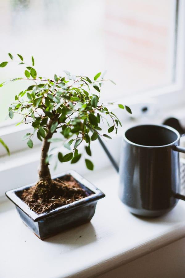 海外の窓辺に置かれたミニ盆栽