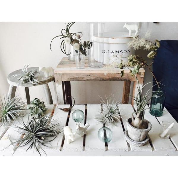 観葉植物20