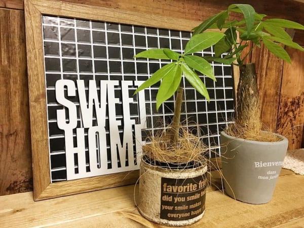 観葉植物10