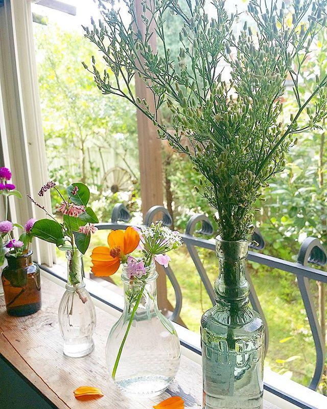 たくさんの植物に癒される窓辺