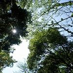 仕事の利便性より暮らしの満足度が大切。公園と緑、環境で決めた。2