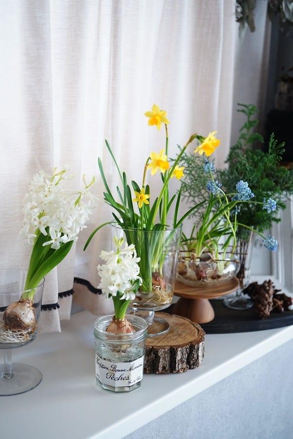 球根植物 飾り方2