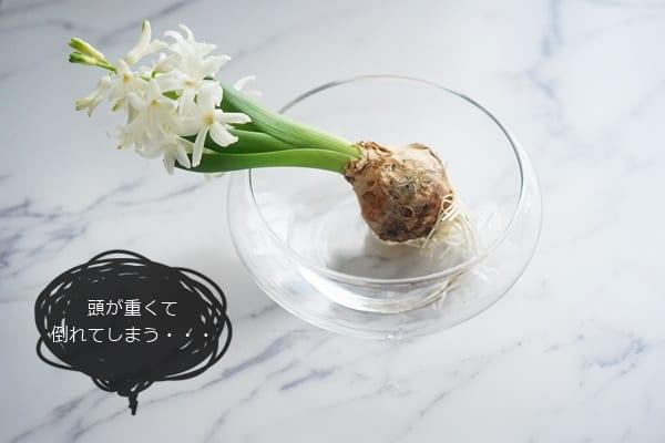 球根植物 飾り方9