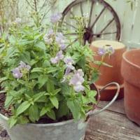 春の花でガーデニングを彩ろう♪おすすめの種類&コーディネート術をご紹介